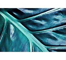 Cellulose Dreams Photographic Print
