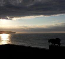Manx Cat Sunset by m0azc