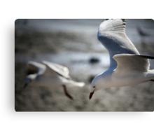 ~Gull Dreaming~ Canvas Print