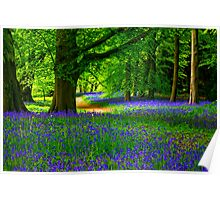 Bluebell Wood - Thorpe Perrow #3 Poster