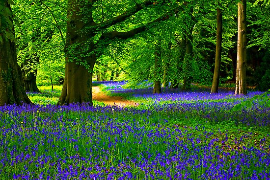 Bluebell Wood - Thorpe Perrow #3 by Trevor Kersley