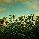 A Field of Sunflowers by rosedew