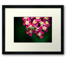 Focus shift Framed Print