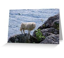 Lamb shanks Snowdonia Greeting Card