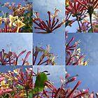 Honeysuckle Skies by Gavin Wilson