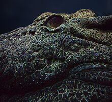 neon croc  by shallay