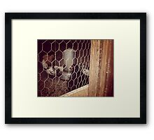 Chickens Framed Print