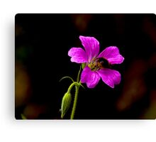 Foraging Bee #1 Canvas Print
