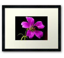 Foraging Bee a Closer View Framed Print