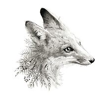 A Young Fox Photographic Print