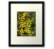 Another plums Framed Print