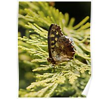 Speckled Brown Butterfly Poster