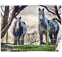 Horses on the Hill .  Poster