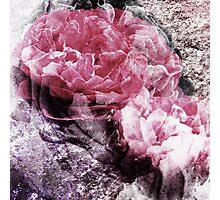 enchanted stone Photographic Print