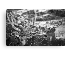 equipped for aggression; yet inherently calm... Canvas Print