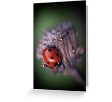 Last Ladybird Greeting Card