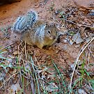 """I'm not nuts...Don't get any closer !"" by Nancy Richard"