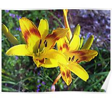 Twin yellow daylilies Poster