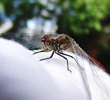 dragonfly on white napkin by dshones