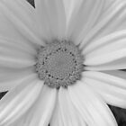 Daisy in black and white by tneldreth