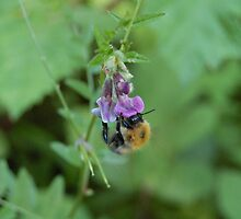 Humble Bumble by bushhatman