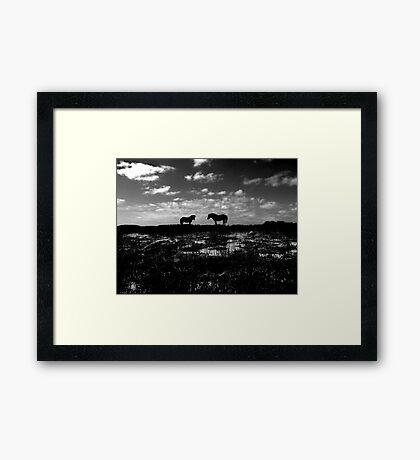 Black Beauties Framed Print