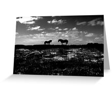 Black Beauties Greeting Card