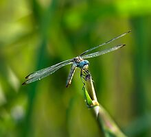 Dragonfly by Charlie