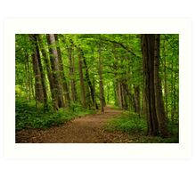 Sacred Grove Path Art Print