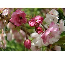 Blossom Pink Photographic Print
