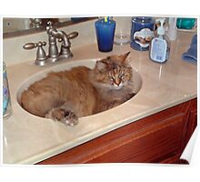 A Sink Full Of Cat Poster