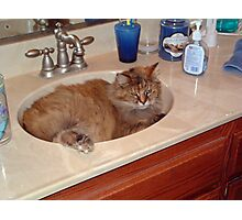 A Sink Full Of Cat Photographic Print