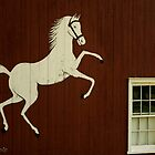 Horse over window by Kirstyshots