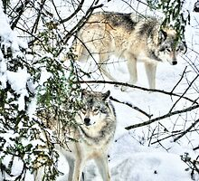 Meet me in the forest - Timber wolves by Poete100