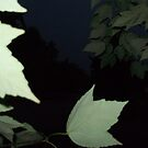 Lost between the leaves by takemeawaycn