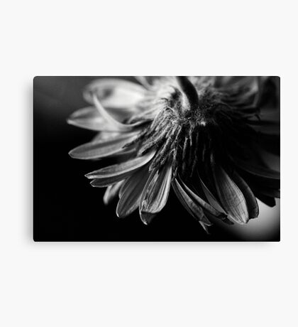 Dying Canvas Print