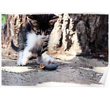 Playful Kitten Poster