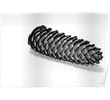 cone of pine Poster