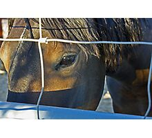 The Eyes are the Windows to a Wild Horse's Soul Photographic Print