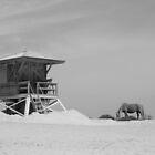 beach horse by Meghann Clark