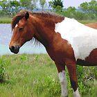 wild pony by Meghann Clark