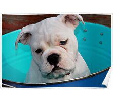bucket of puppy Poster