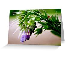 uniquely different beauty Greeting Card