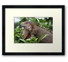 Iguana-Suit of Armour Framed Print