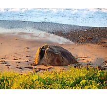 rock on Photographic Print