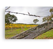 Fence on Vineyard, Eden Valley Canvas Print