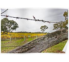 Fence on Vineyard, Eden Valley Poster