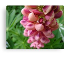 tender loving (lupin flower) Canvas Print