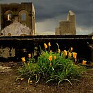 Lithgow NSW - Remains of the Ferranti Blast Furnace No 2 by Rosalie Dale