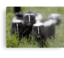 Oh Cool...Baby Black And White Foxes :-)  Metal Print